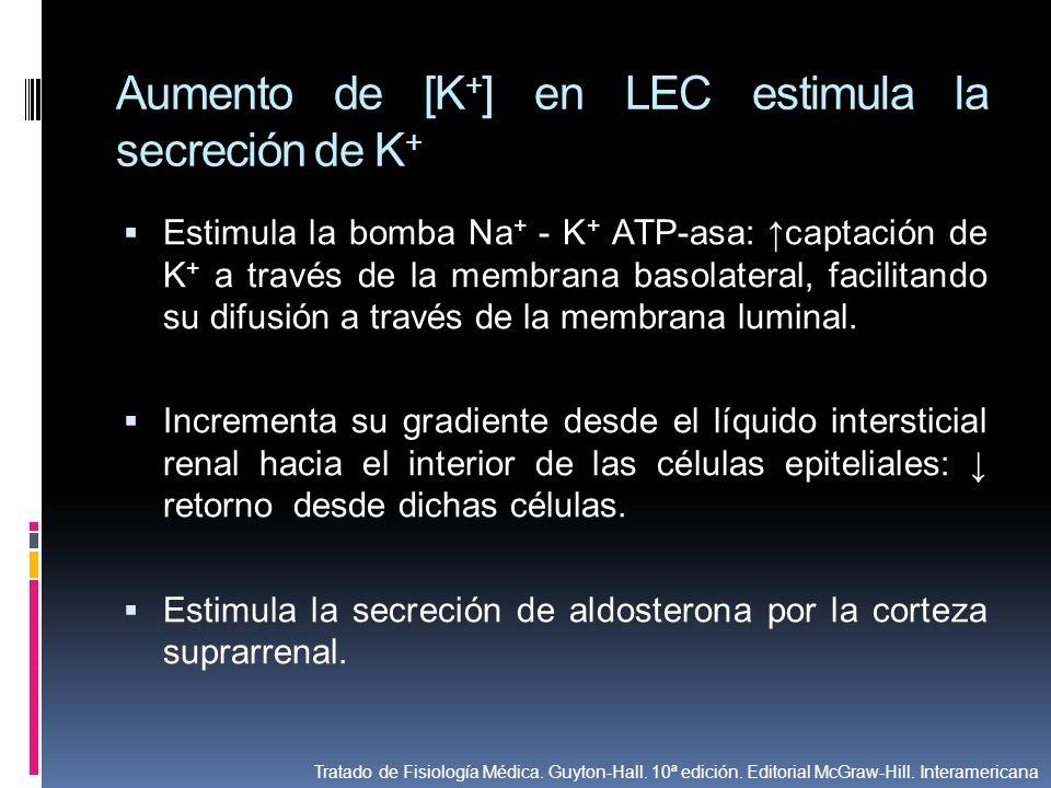Aumento de [K + ] en LEC estimula la secreción de K + Estimula la bomba Na + - K + ATP-asa: captación de K + a través de la membrana basolateral, faci