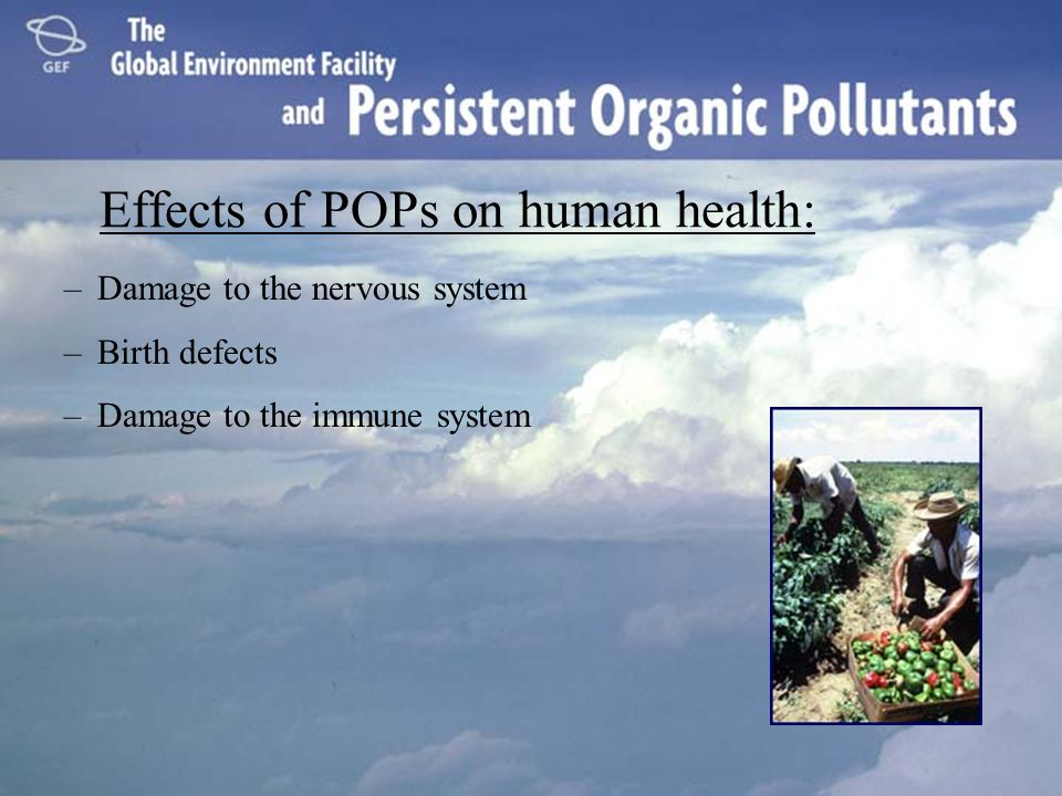 Effects of POPs on human health: –Damage to the nervous system –Birth defects –Damage to the immune system