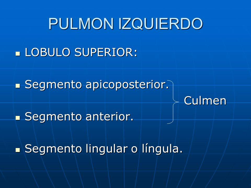 PULMON IZQUIERDO LOBULO SUPERIOR: LOBULO SUPERIOR: Segmento apicoposterior. Segmento apicoposterior. Culmen Culmen Segmento anterior. Segmento anterio