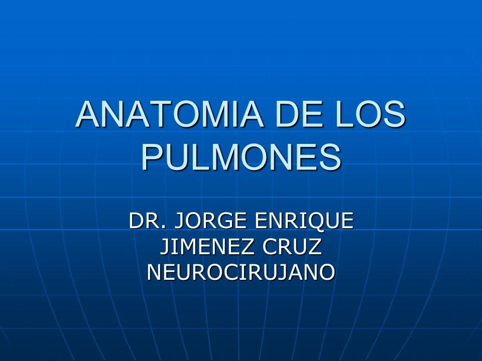 ANATOMIA DE LOS PULMONES DR. JORGE ENRIQUE JIMENEZ CRUZ NEUROCIRUJANO
