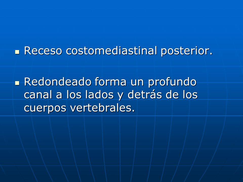 Receso costomediastinal posterior. Receso costomediastinal posterior. Redondeado forma un profundo canal a los lados y detrás de los cuerpos vertebral