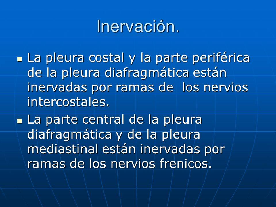 Inervación. La pleura costal y la parte periférica de la pleura diafragmática están inervadas por ramas de los nervios intercostales. La pleura costal