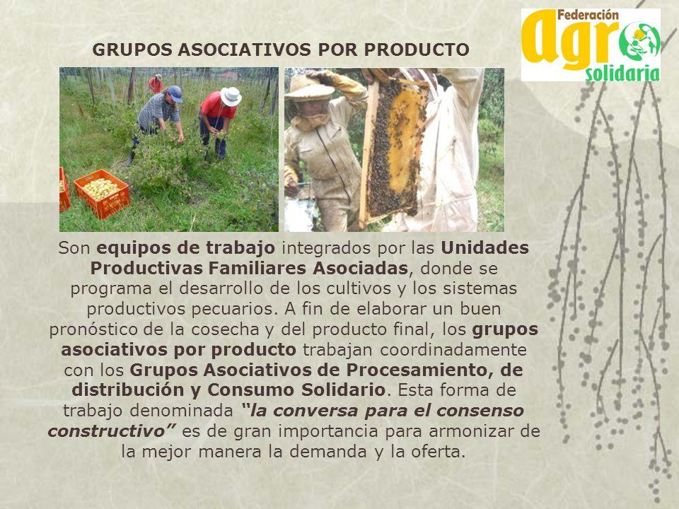 GRUPOS ASOCIATIVOS POR PRODUCTO Son equipos de trabajo integrados por las Unidades Productivas Familiares Asociadas, donde se programa el desarrollo d