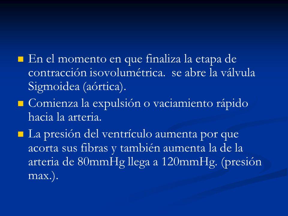 El ventrículo incluso supera la presión de la arteria durante la etapa de vaciamiento rápido.