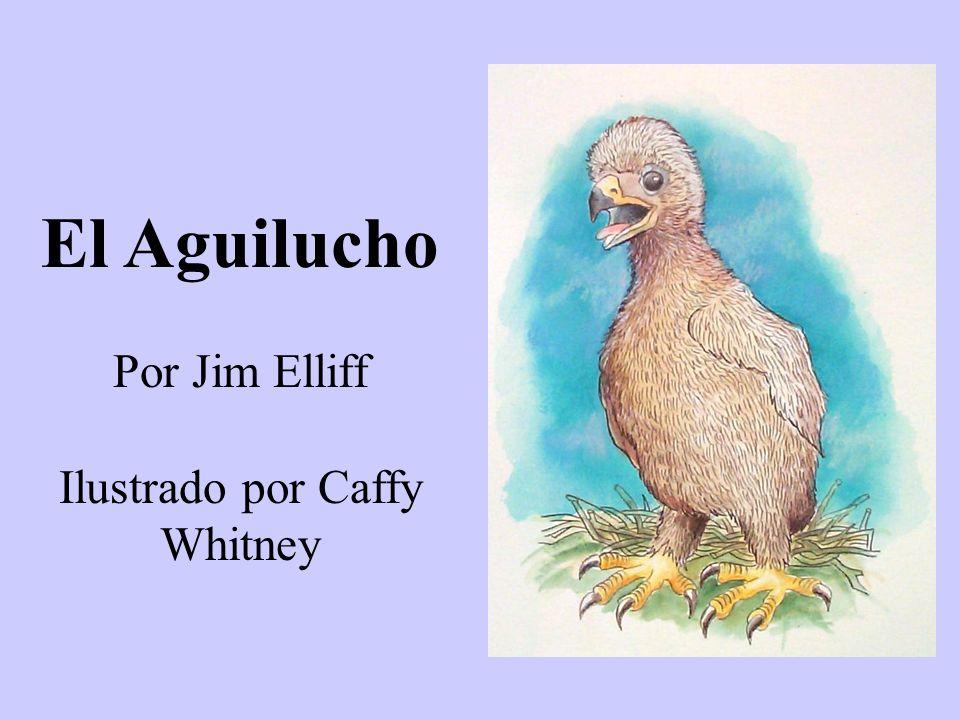 El Aguilucho Por Jim Elliff Ilustrado por Caffy Whitney
