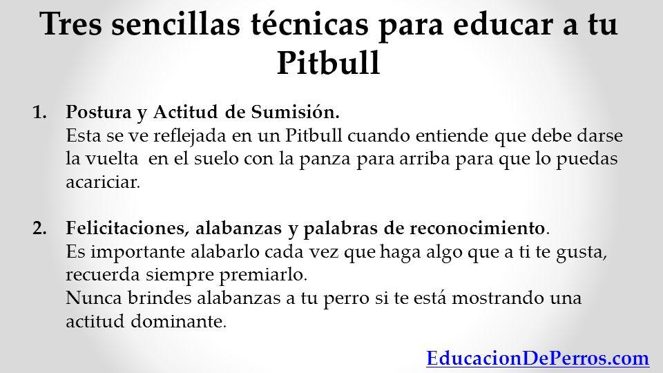 Tres sencillas técnicas para educar a tu Pitbull 1.Postura y Actitud de Sumisión. Esta se ve reflejada en un Pitbull cuando entiende que debe darse la