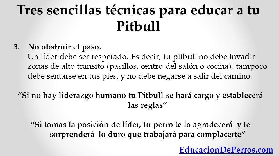Tres sencillas técnicas para educar a tu Pitbull 3. No obstruir el paso. Un líder debe ser respetado. Es decir, tu pitbull no debe invadir zonas de al