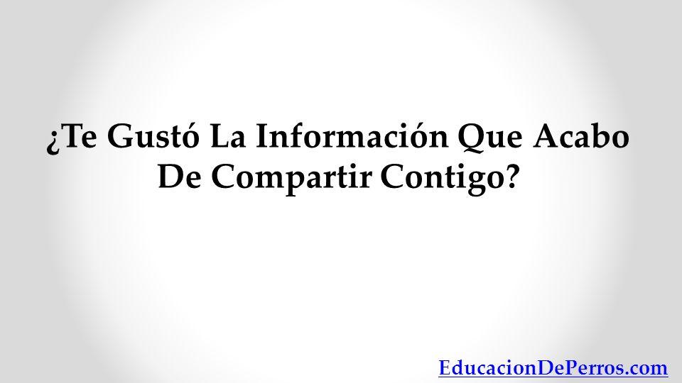 ¿Te Gustó La Información Que Acabo De Compartir Contigo? EducacionDePerros.com