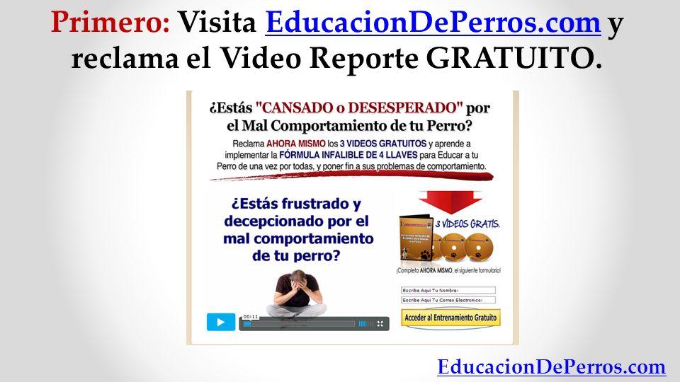 Primero: Visita EducacionDePerros.com y reclama el Video Reporte GRATUITO. EducacionDePerros.com