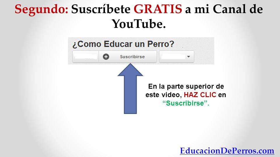 Segundo: Suscríbete GRATIS a mi Canal de YouTube. En la parte superior de este video, HAZ CLIC enSuscribirse. EducacionDePerros.com