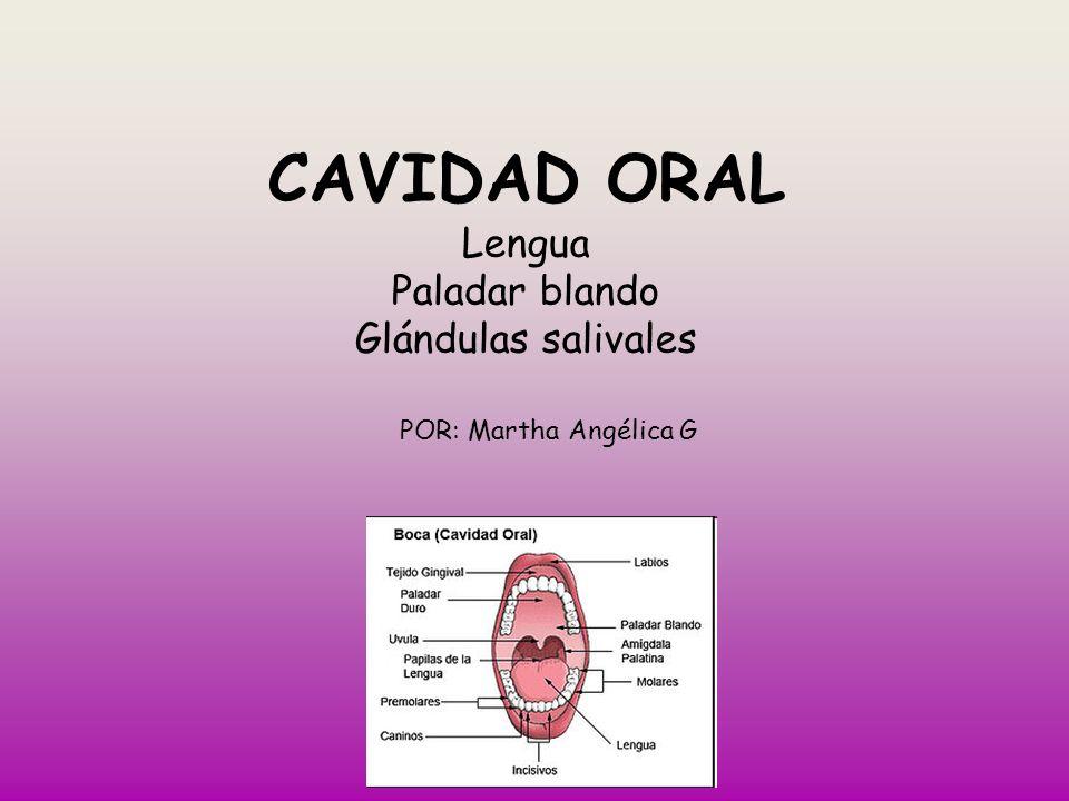 CAVIDAD ORAL Lengua Paladar blando Glándulas salivales POR: Martha Angélica G