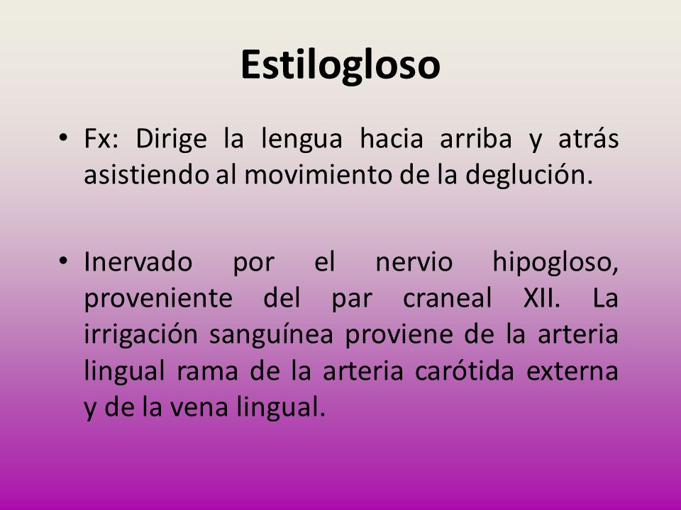 Fx: Dirige la lengua hacia arriba y atrás asistiendo al movimiento de la deglución. Inervado por el nervio hipogloso, proveniente del par craneal XII.