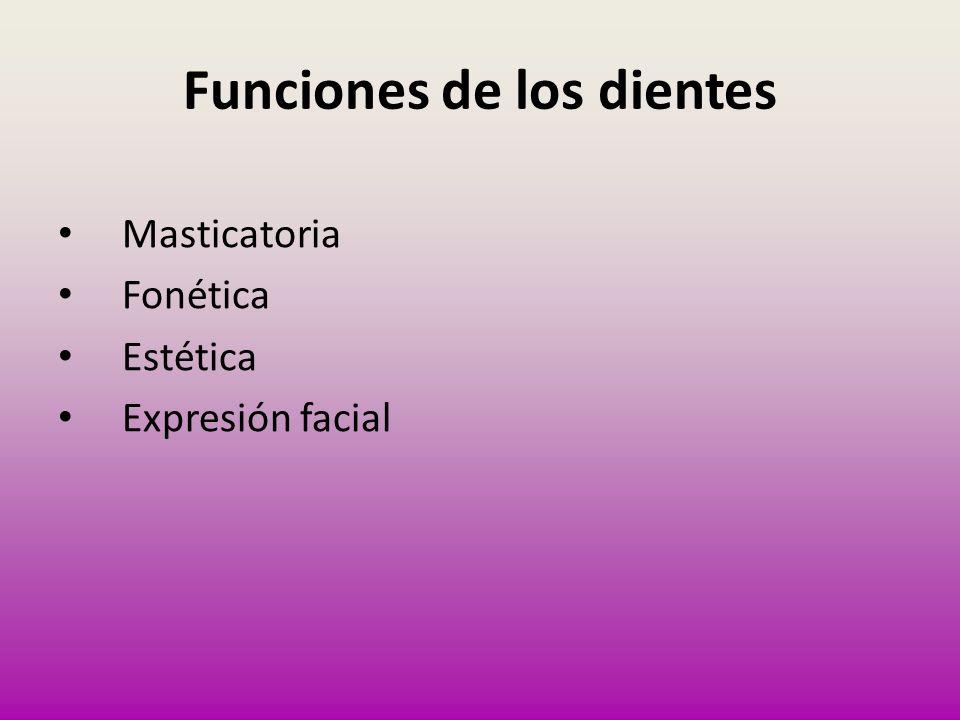Funciones de los dientes Masticatoria Fonética Estética Expresión facial