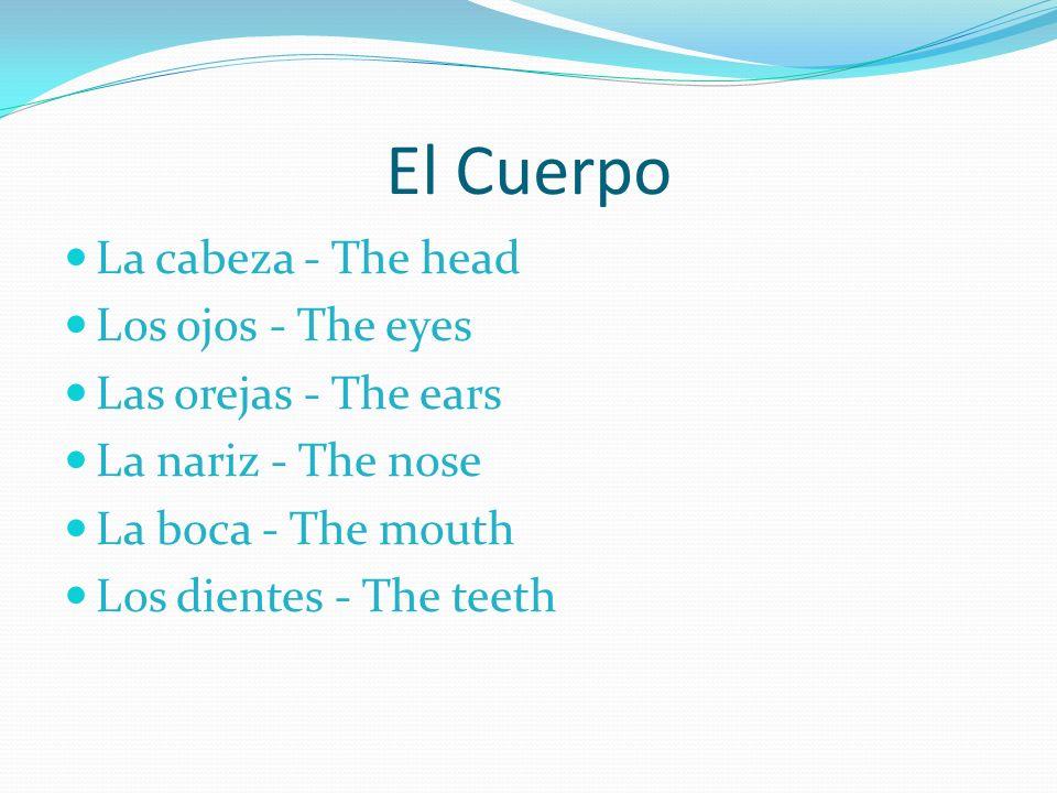 Más Partes – More Parts La lengua - The tongue La garganta - The throat El cuello - The neck El pecho - The chest El estomago - The stomach La espalda - The back