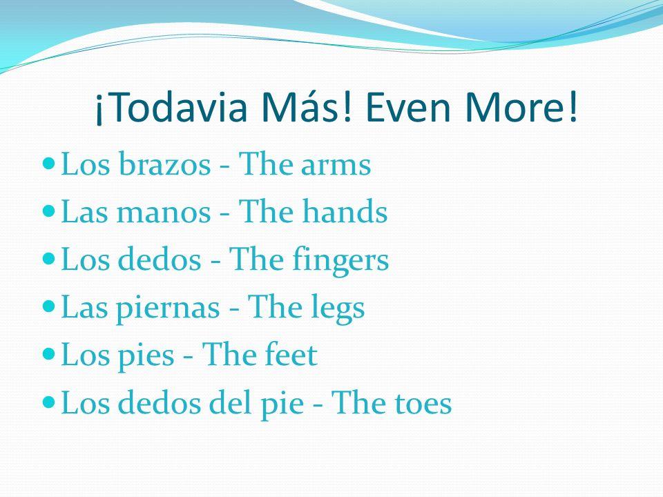 ¡Todavia Más! Even More! Los brazos - The arms Las manos - The hands Los dedos - The fingers Las piernas - The legs Los pies - The feet Los dedos del