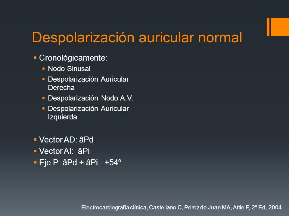 Despolarización auricular normal Cronológicamente: Nodo Sinusal Despolarización Auricular Derecha Despolarización Nodo A.V. Despolarización Auricular
