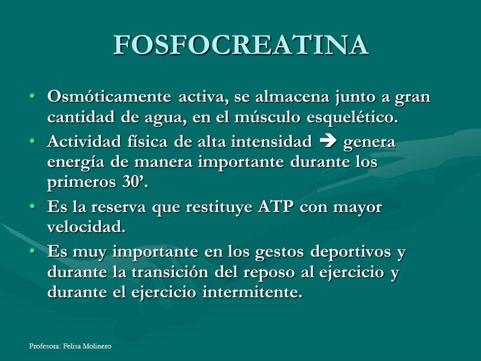 Profesora: Felisa Molinero FOSFOCREATINA Osmóticamente activa, se almacena junto a gran cantidad de agua, en el músculo esquelético.Osmóticamente acti