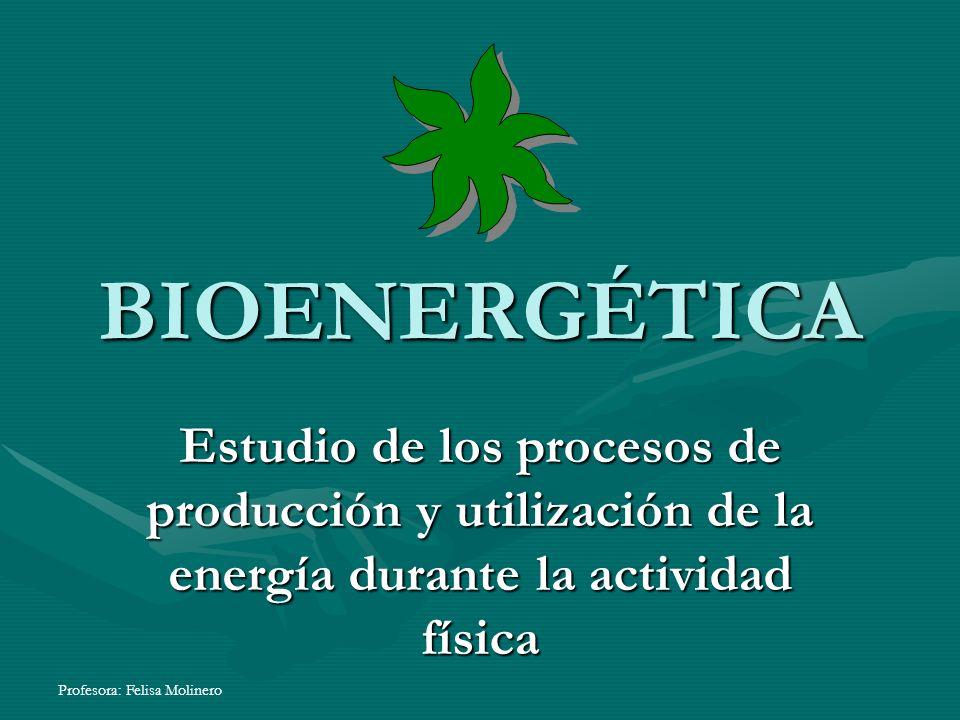 Profesora: Felisa Molinero BIOENERGÉTICA Estudio de los procesos de producción y utilización de la energía durante la actividad física
