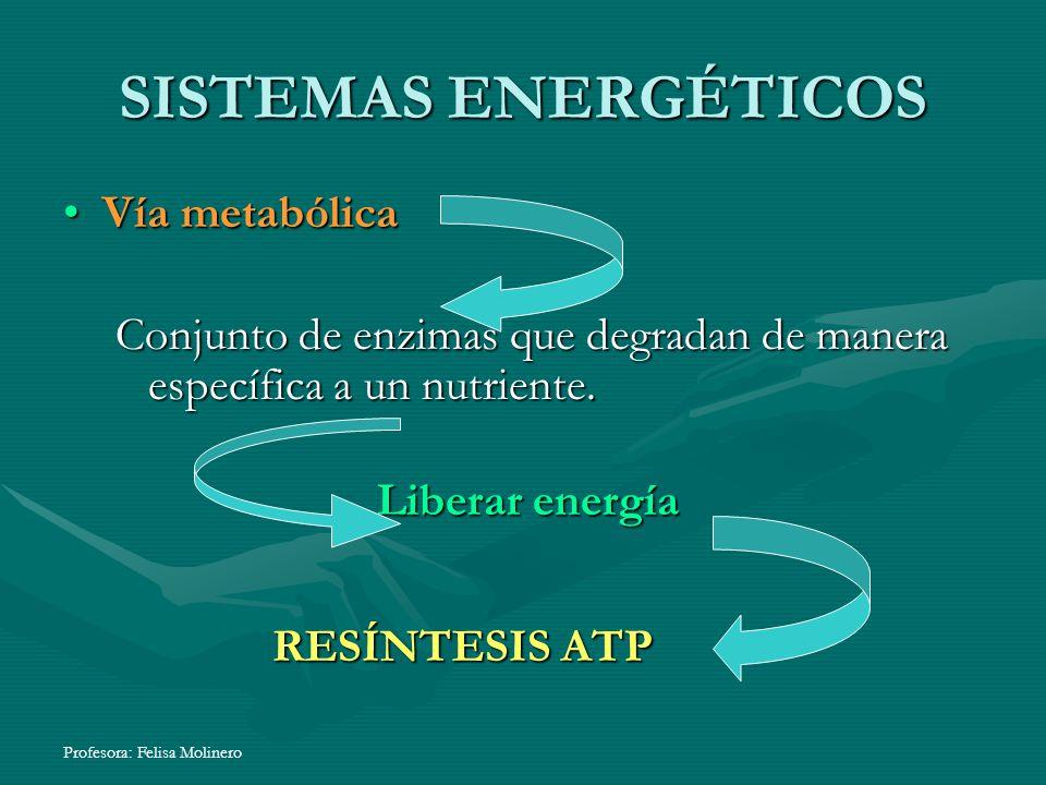 Profesora: Felisa Molinero SISTEMAS ENERGÉTICOS Vía metabólica Conjunto de enzimas que degradan de manera específica a un nutriente. Liberar energía R