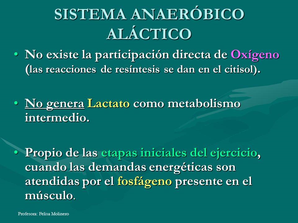 Profesora: Felisa Molinero SISTEMA ANAERÓBICO ALÁCTICO No existe la participación directa de Oxígeno ( las reacciones de resíntesis se dan en el citis