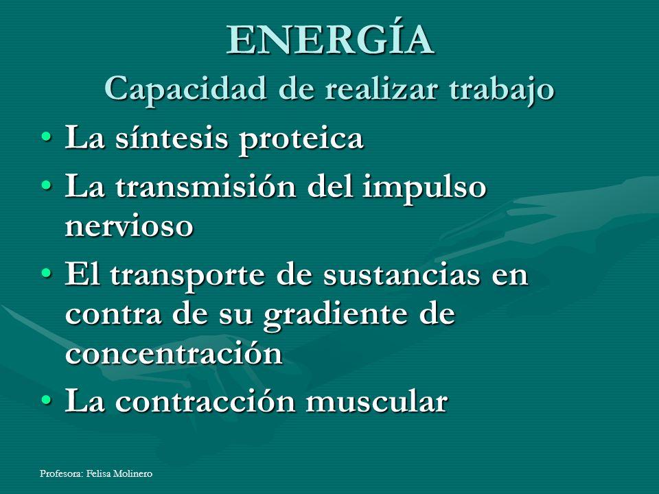 Profesora: Felisa Molinero ENERGÍA Capacidad de realizar trabajo La síntesis proteica La transmisión del impulso nervioso El transporte de sustancias