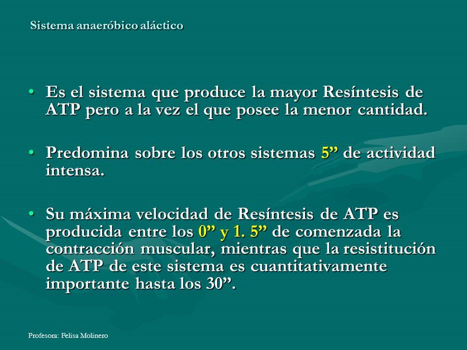 Profesora: Felisa Molinero Sistema anaeróbico aláctico Es el sistema que produce la mayor Resíntesis de ATP pero a la vez el que posee la menor cantid