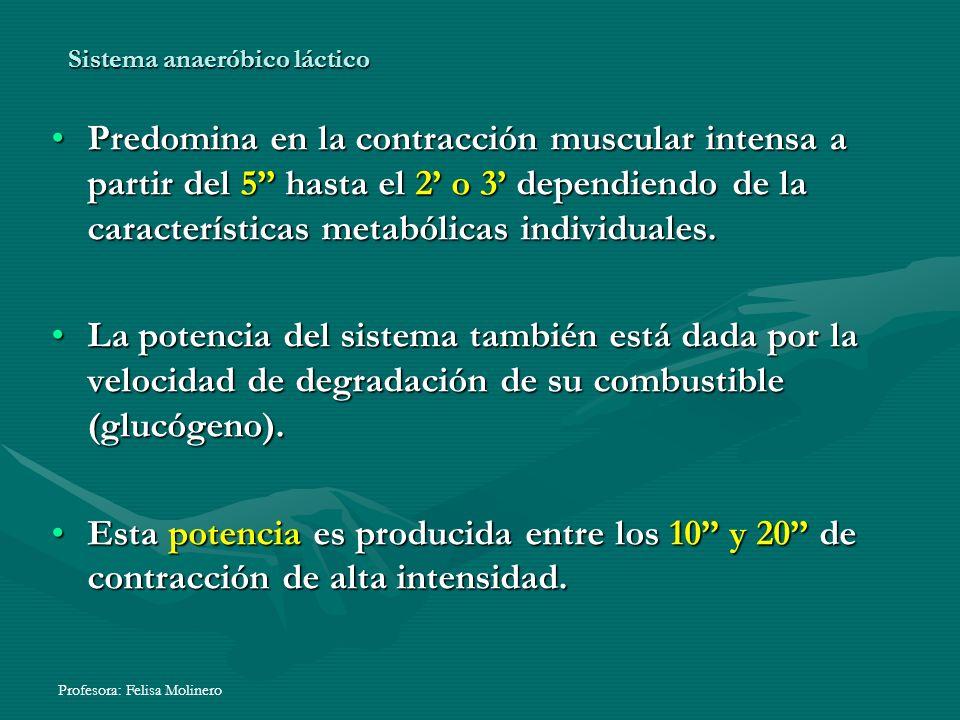 Profesora: Felisa Molinero Sistema anaeróbico láctico Predomina en la contracción muscular intensa a partir del 5 hasta el 2 o 3 dependiendo de la car