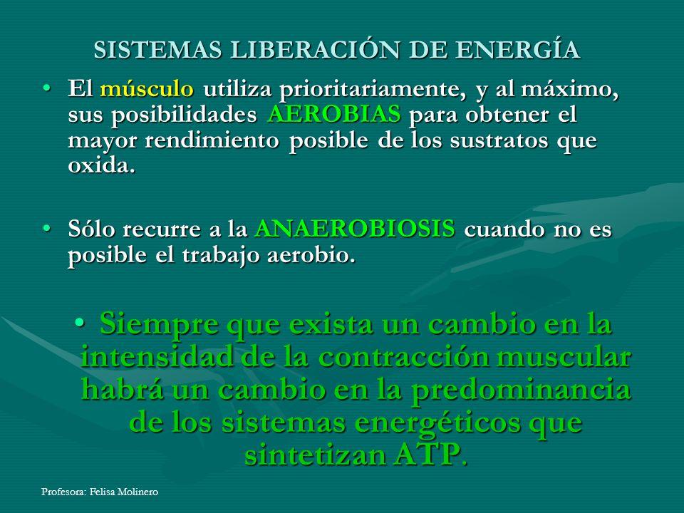 Profesora: Felisa Molinero El músculo utiliza prioritariamente, y al máximo, sus posibilidades AEROBIAS para obtener el mayor rendimiento posible de l
