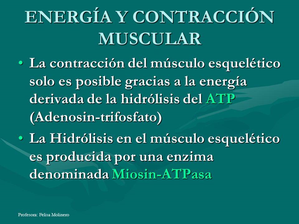 Profesora: Felisa Molinero ENERGÍA Y CONTRACCIÓN MUSCULAR La contracción del músculo esquelético solo es posible gracias a la energía derivada de la h