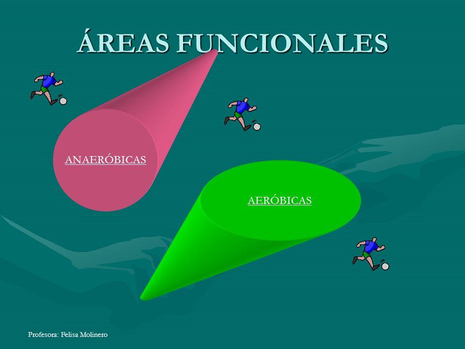 Profesora: Felisa Molinero ÁREAS FUNCIONALES ANAERÓBICAS AERÓBICAS
