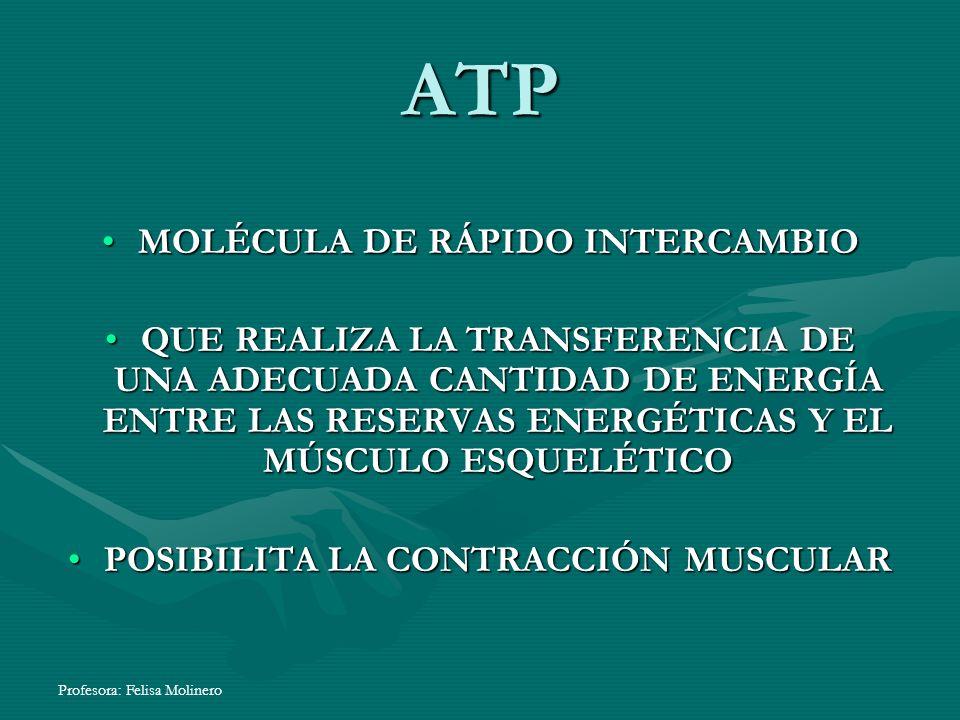 Profesora: Felisa Molinero ATP MOLÉCULA DE RÁPIDO INTERCAMBIO QUE REALIZA LA TRANSFERENCIA DE UNA ADECUADA CANTIDAD DE ENERGÍA ENTRE LAS RESERVAS ENER