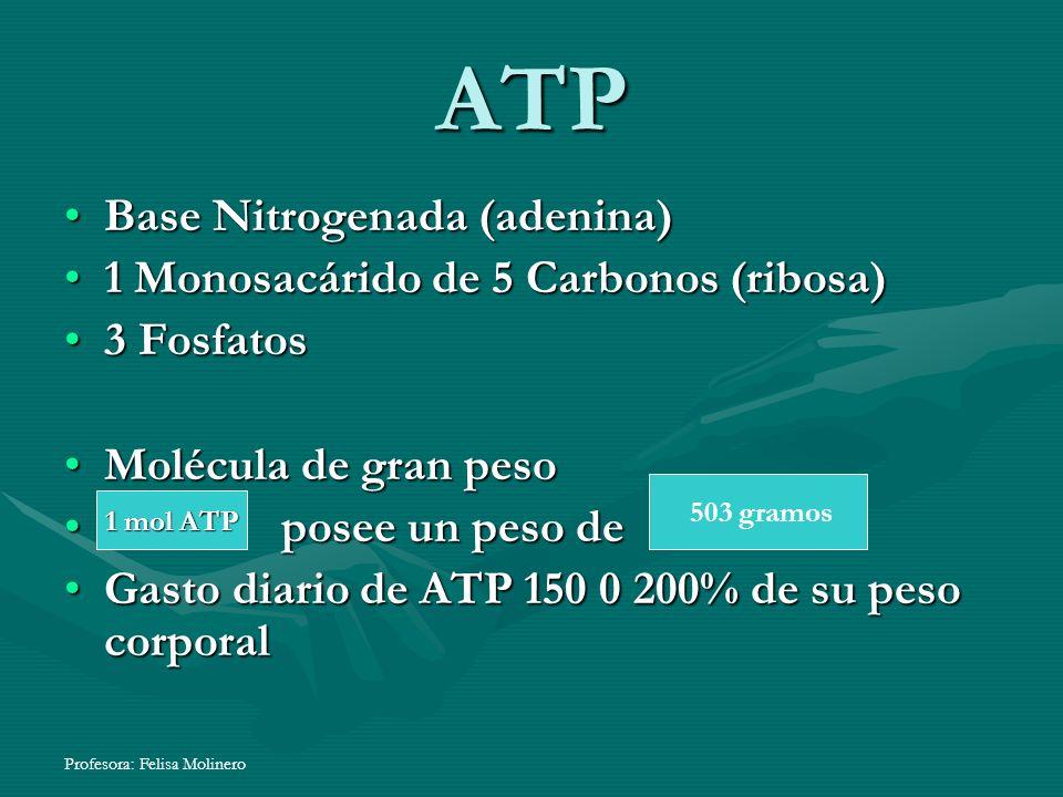 Profesora: Felisa Molinero ATP Base Nitrogenada (adenina)Base Nitrogenada (adenina) 1 Monosacárido de 5 Carbonos (ribosa)1 Monosacárido de 5 Carbonos
