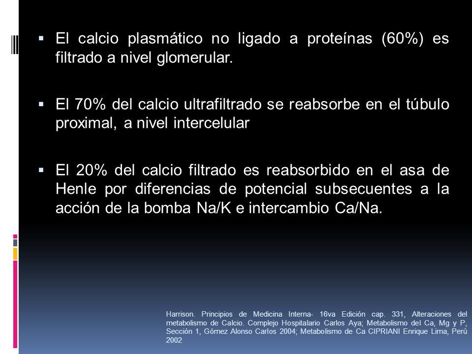 El calcio plasmático no ligado a proteínas (60%) es filtrado a nivel glomerular. El 70% del calcio ultrafiltrado se reabsorbe en el túbulo proximal, a