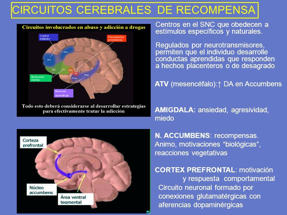 ATV (mesencéfalo): DA en Accumbens AMIGDALA: ansiedad, agresividad, miedo N. ACCUMBENS: recompensas. Animo, motivaciones biológicas, reacciones vegeta