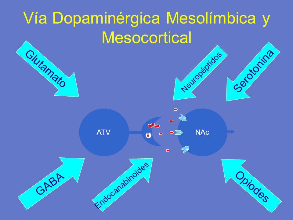 NAcATV D1 D2 D3 Vía Dopaminérgica Mesolímbica y Mesocortical Glutamato GABA Opiodes Endocanabinoides Serotonina Neuropéptidos