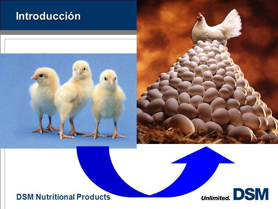 DSM Nutritional Products 1 Contenido Introducción Consideraciones de manejo durante la crianza Nutrición de la polla de reemplazo Nutrición de la gall