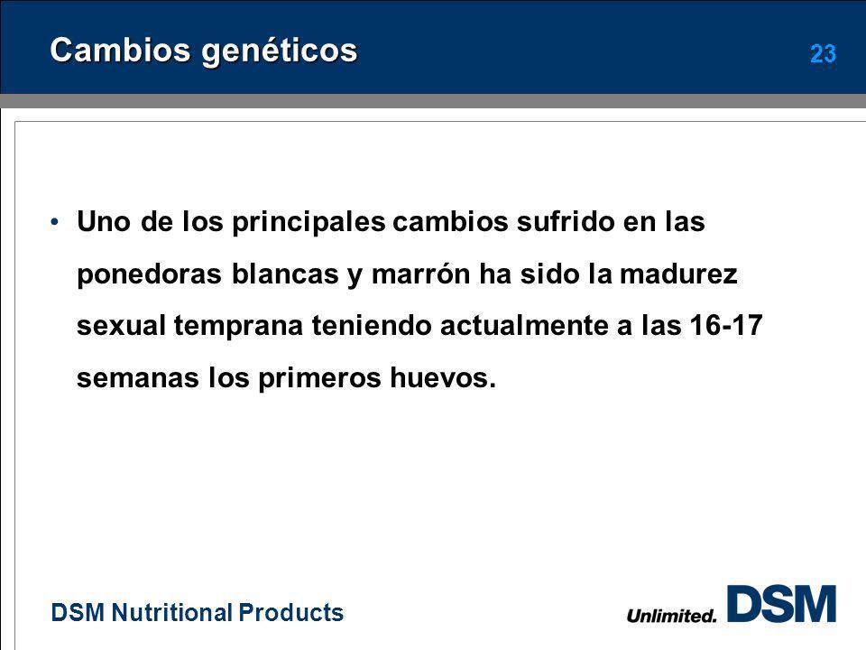 DSM Nutritional Products Nutrición de la gallina en el periodo de producción