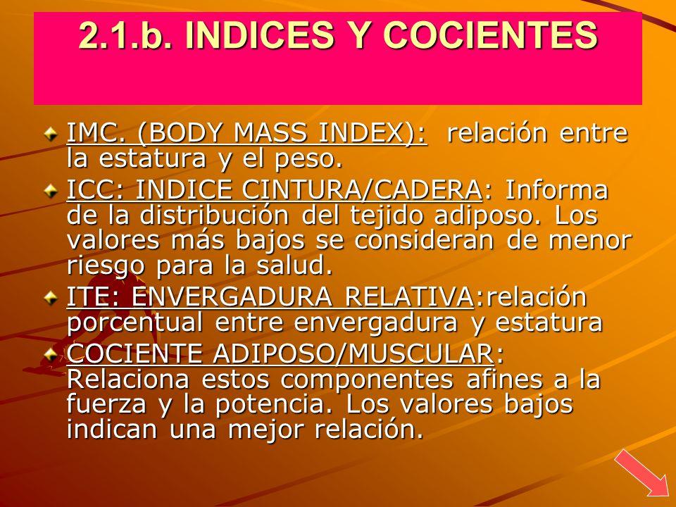 2.1.b. INDICES Y COCIENTES IMC. (BODY MASS INDEX): relación entre la estatura y el peso. ICC: INDICE CINTURA/CADERA: Informa de la distribución del te