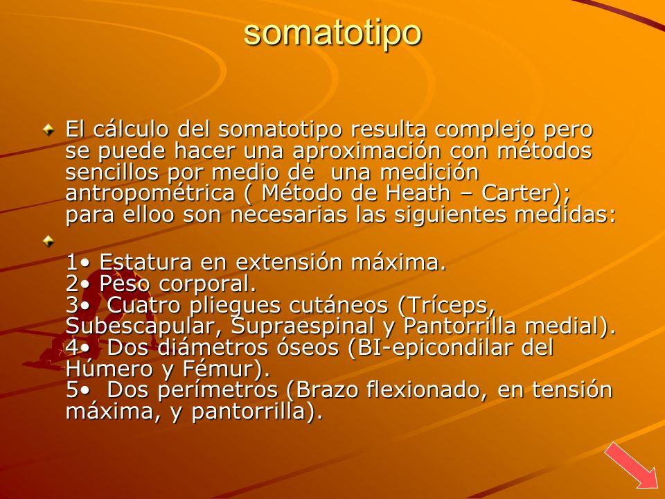 somatotipo El cálculo del somatotipo resulta complejo pero se puede hacer una aproximación con métodos sencillos por medio de una medición antropométr