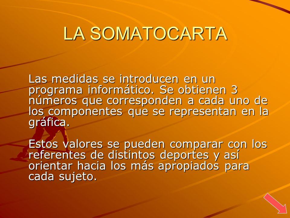LA SOMATOCARTA Las medidas se introducen en un programa informático. Se obtienen 3 números que corresponden a cada uno de los componentes que se repre