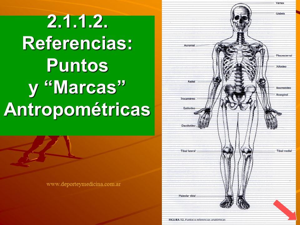 BICEPS TRICEPS SUBESCAPULAR CRESTA ILIACA ó SUPRAILIACO 2.1.2.5.