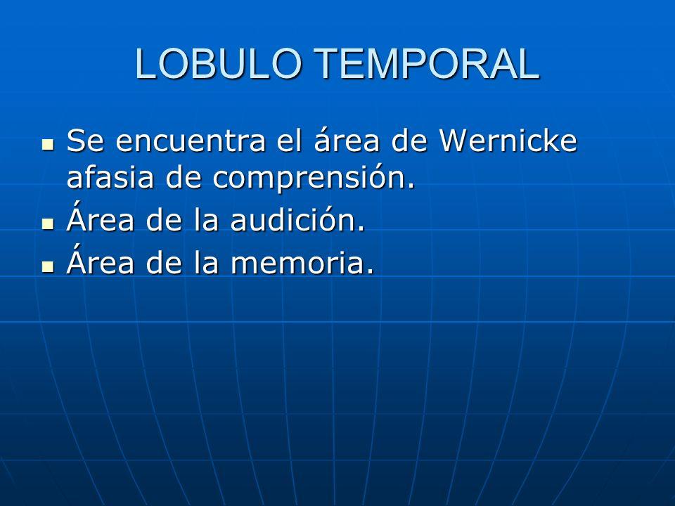 LOBULO TEMPORAL Se encuentra el área de Wernicke afasia de comprensión. Se encuentra el área de Wernicke afasia de comprensión. Área de la audición. Á