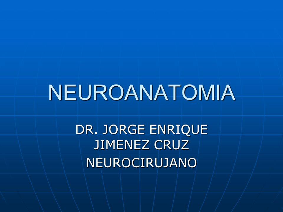 NEUROANATOMIA DR. JORGE ENRIQUE JIMENEZ CRUZ NEUROCIRUJANO