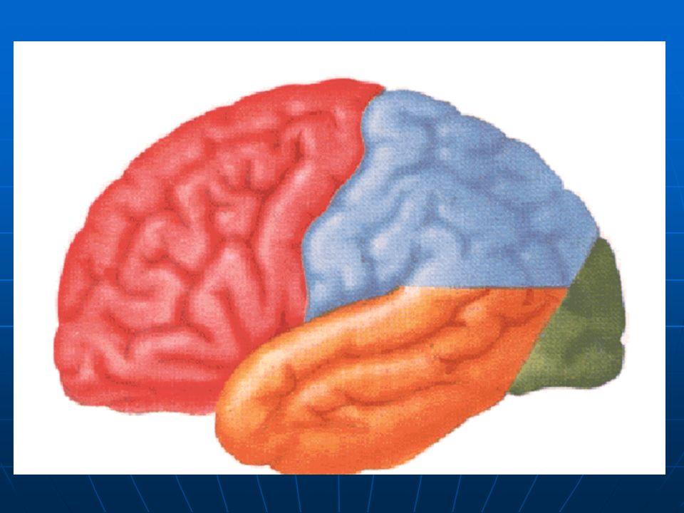 Parálisis facial periférica El paciente no puede arrugar la frente ni cerrar el ojo del lado paralizado.