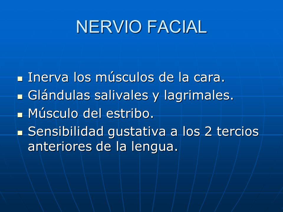 NERVIO FACIAL Inerva los músculos de la cara. Inerva los músculos de la cara. Glándulas salivales y lagrimales. Glándulas salivales y lagrimales. Músc