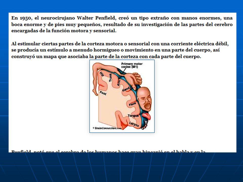 Parálisis facial periférica La comisura bucal se desvía hacia el lado sano.