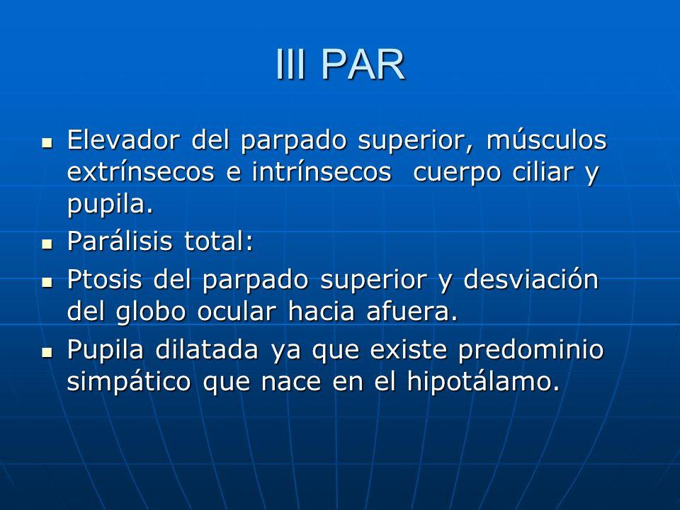 III PAR Elevador del parpado superior, músculos extrínsecos e intrínsecos cuerpo ciliar y pupila. Elevador del parpado superior, músculos extrínsecos