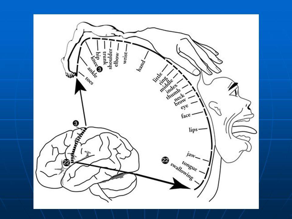 Compresiones de la base del cráneo: Compresiones de la base del cráneo: Piso posterior : Meningiomas, Schwanomas.