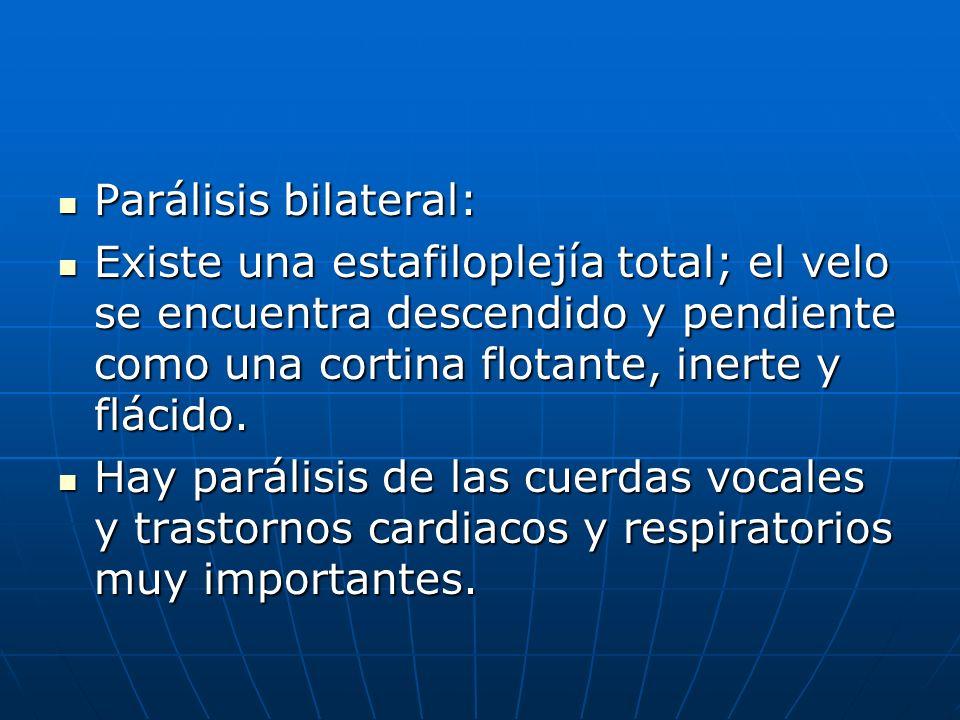 Parálisis bilateral: Parálisis bilateral: Existe una estafiloplejía total; el velo se encuentra descendido y pendiente como una cortina flotante, iner