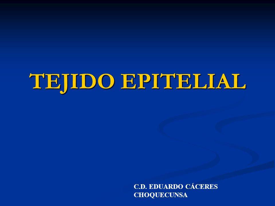 TEJIDO EPITELIAL Definición.- esta formada por células poco transformadas con sustancia intersticial escasa o nula, se caracteriza por que recubre y/o protege a los demás tejidos.